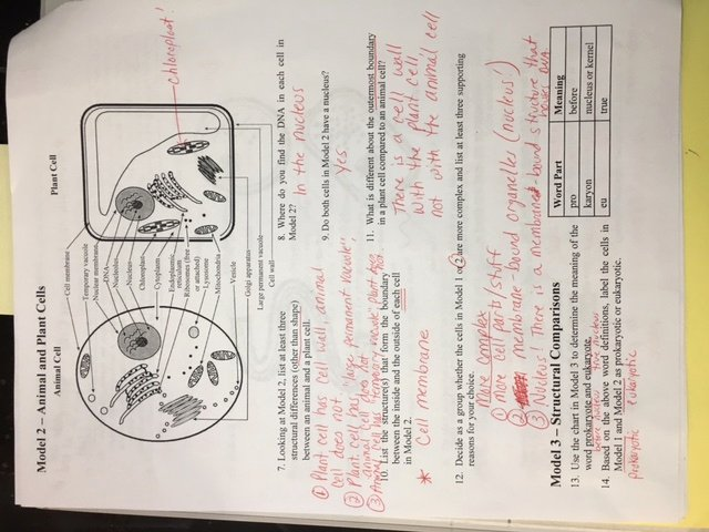 7.3 Cell Transport Worksheet Answers Awesome Biology 2016 17 Mrs Sheets Cahs Sciences