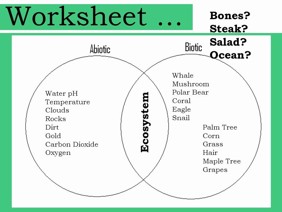 Abiotic and Biotic Factors Worksheet Luxury Biotic and Abiotic Worksheet Wiildcreative