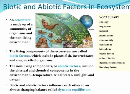 Abiotic Vs.biotic Factors Worksheet Answers Awesome Biotic Vs Abiotic Activity Abiotic Vs Biotic Factors