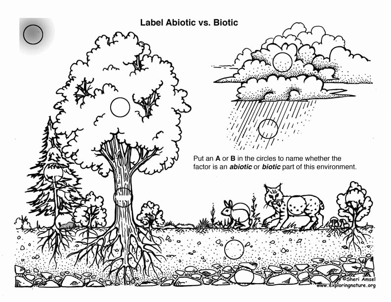 Abiotic Vs.biotic Factors Worksheet Answers Awesome Biotic Vs Abiotic Activity