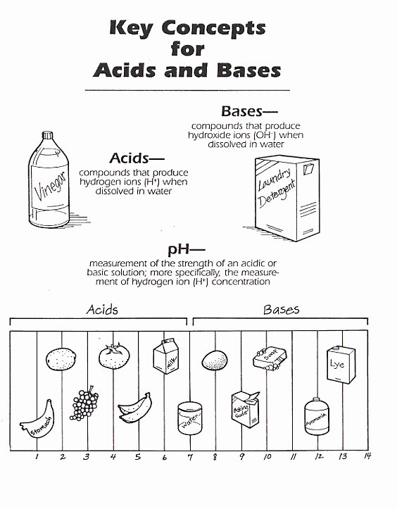 Acids and Bases Worksheet Answers Luxury Acid and Bases Worksheet