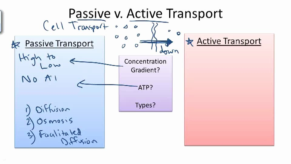 Active and Passive Transport Worksheet Beautiful 43 Passive and Active Transport Worksheet Uncategorized