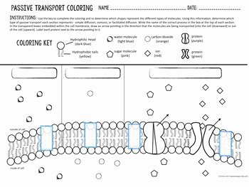 Active and Passive Transport Worksheet Lovely Cell Transport Passive Transport Coloring by Biology