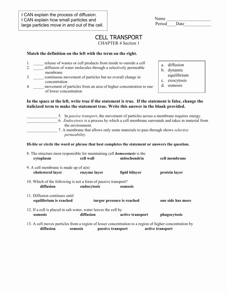 Active and Passive Transport Worksheet New Cell Transport Worksheet