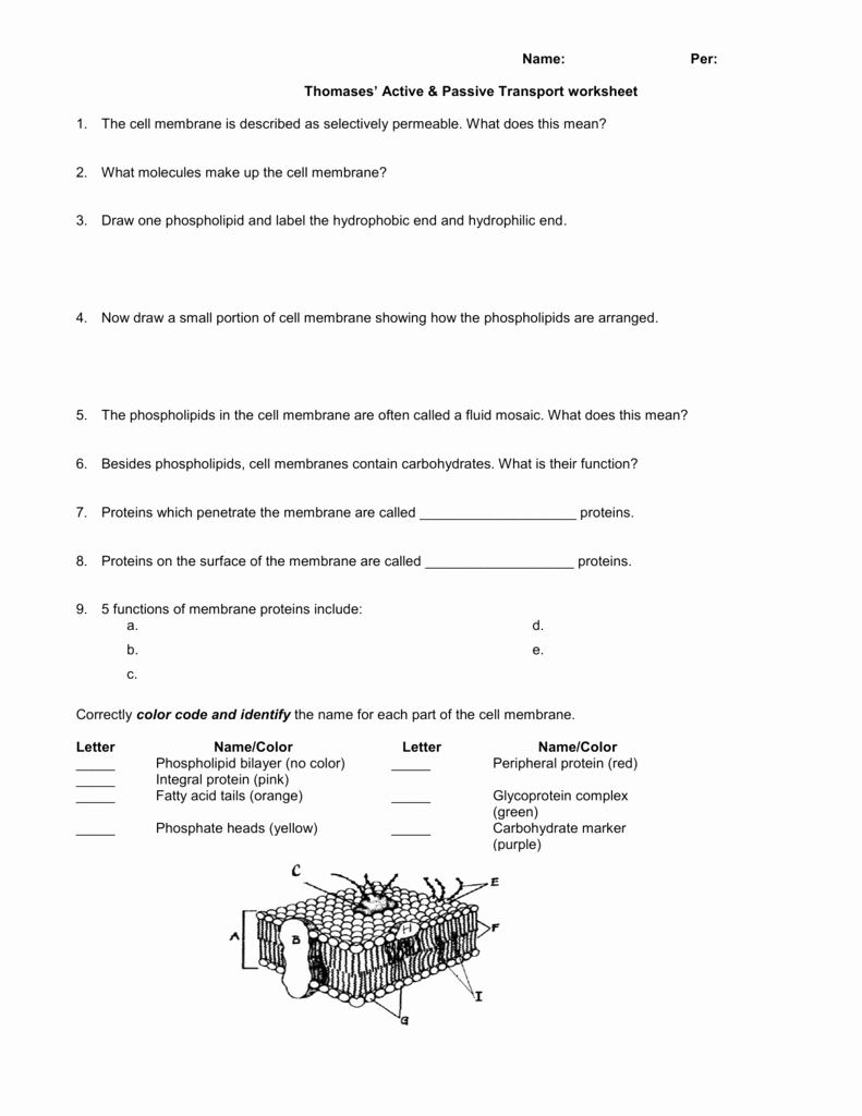 Active and Passive Transport Worksheet New Name Per Thomases Active & Passive Transport Worksheet