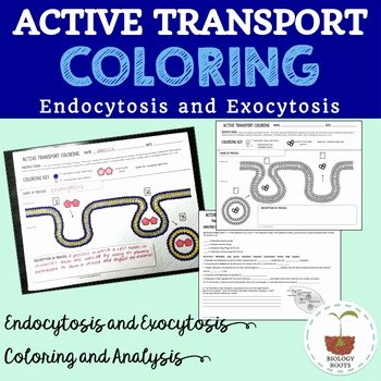 Active and Passive Transport Worksheet Unique Cell Transport Active Transport Coloring Endocytosis and