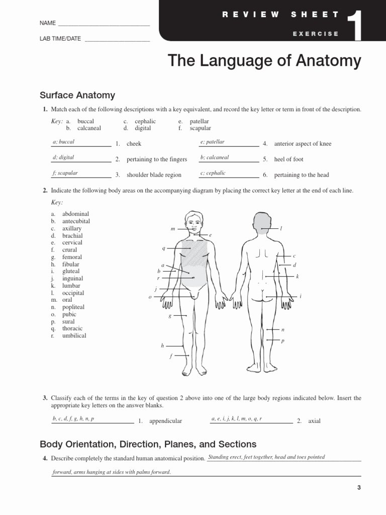 Anatomical Terms Worksheet Answers Beautiful Exercise 1 Language Of Anatomy