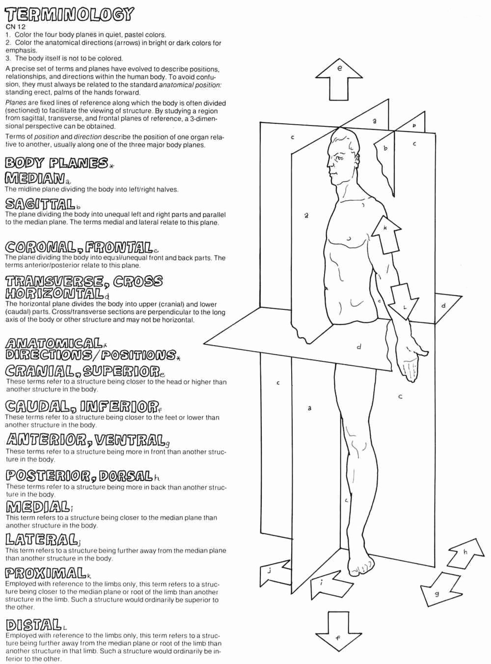 Anatomical Terms Worksheet Answers New 13 Best Of Hip Anatomy the Worksheet Sunflower