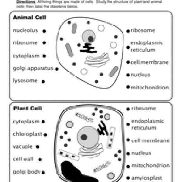 Animal and Plant Cells Worksheet Elegant Plant Cell Diagram Worksheet