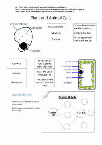 Animal and Plant Cells Worksheet Inspirational Plant and Animal Cells by L Mullany Teaching Resources Tes