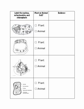 Animal and Plant Cells Worksheet New Paring Plant and Animal Cells Worksheet by Geekology