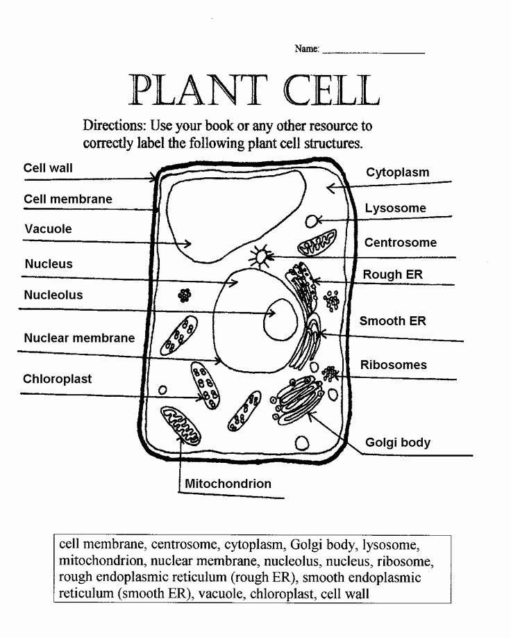 Animal Cell Coloring Worksheet Awesome Plant Cell Parts Worksheet with Word Bank