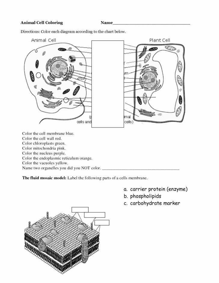 Animal Cell Coloring Worksheet New Plant and Animal Cell Worksheet