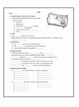 Animal Cell Worksheet Answers Inspirational Cells Worksheet Packet W Answer Keys Plant and Animal