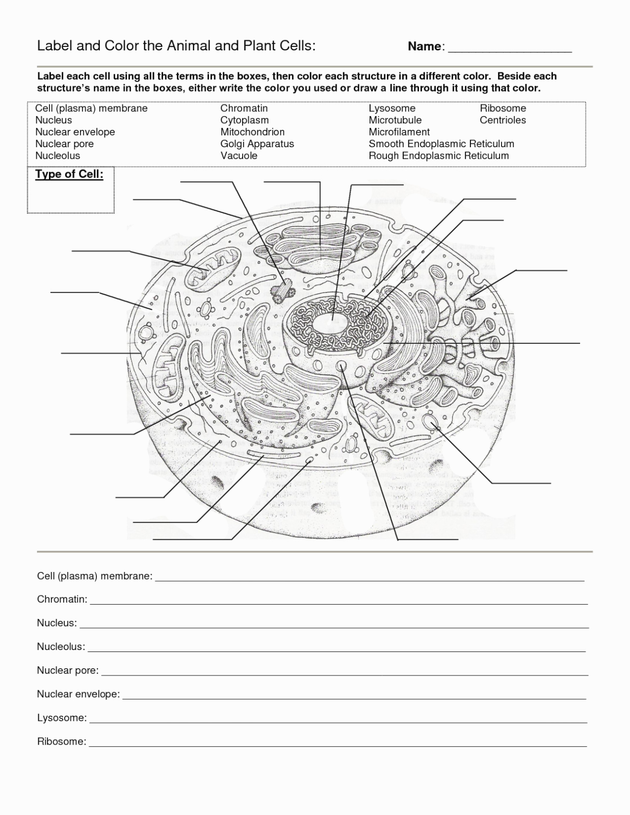 Animal Cell Worksheet Answers Luxury why is Plant and Animal Cell