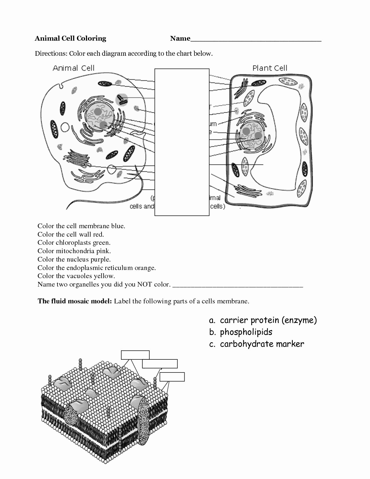 Animal Cells Coloring Worksheet Awesome Animal Cell Coloring Page Coloring Home