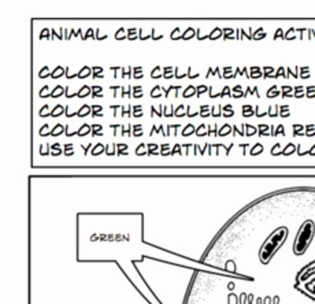 Animal Cells Coloring Worksheet Beautiful Plant Animal Cells Coloring Activity Worksheet 6th 7th 8th