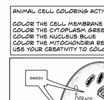 Animal Cells Coloring Worksheet Beautiful Plant Animal Cells Coloring Activity Worksheet 6th 7th 8th