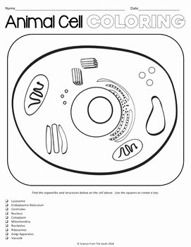 Animal Cells Coloring Worksheet Fresh Animal Cell Coloring Worksheet for Review or assessment