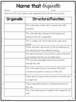 Animal Cells Worksheet Answers Fresh Cells Plant and Animal Cells by Jennifer Findley