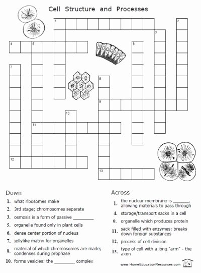 Animal Cells Worksheet Answers Inspirational Free Cells Worksheets 12 Pages Easy to From