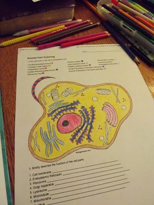 Animal Cells Worksheet Answers Lovely the Road Keeps Changing More Apologia Biology Supplements