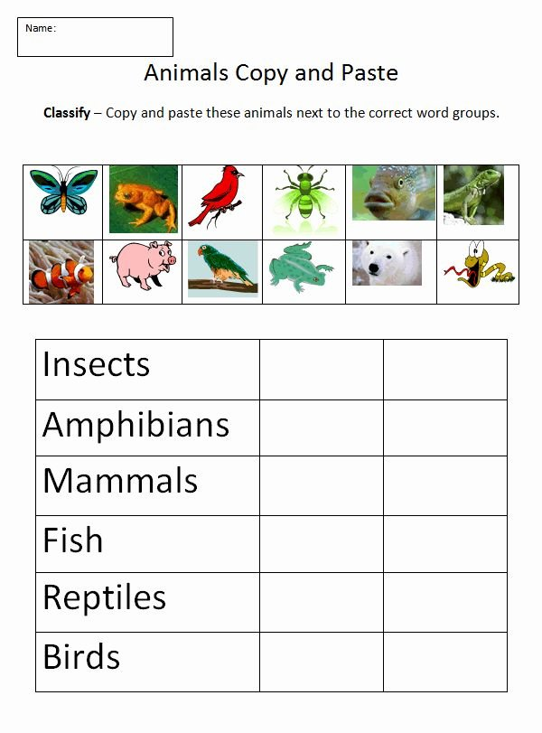 Animal Classification Worksheet Pdf Awesome Animal Classification Worksheet Science