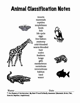 Animal Classification Worksheet Pdf Elegant First or Second Grade forms Worksheets for Notes On