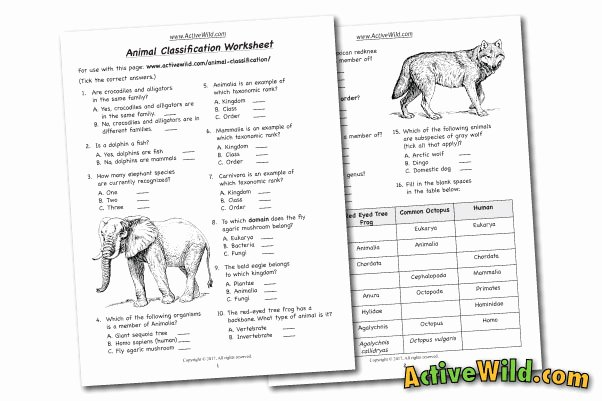 Animal Classification Worksheet Pdf Elegant Free Printable Worksheets for Teachers & Parents