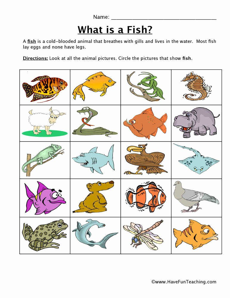 Animal Classification Worksheet Pdf Lovely Animal Classification Worksheet