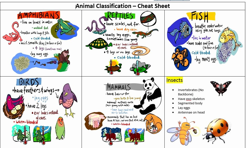 Animal Classification Worksheet Pdf Lovely What Am I An Animal Classification Game Artfingers Art