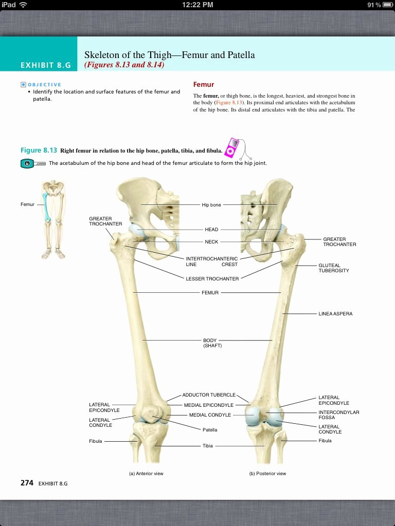 Appendicular Skeleton Worksheet Answers Best Of Worksheet Appendicular Skeleton Worksheet Grass Fedjp