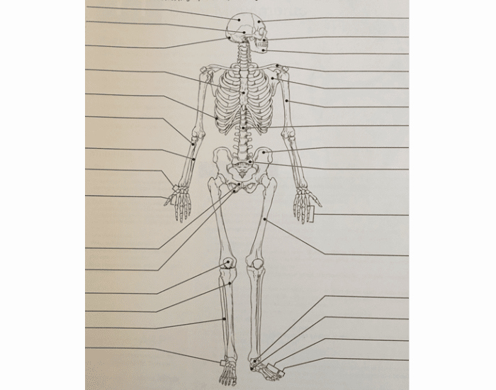 Appendicular Skeleton Worksheet Answers Elegant Appendicular Skeleton Coloring Worksheet – Colouring