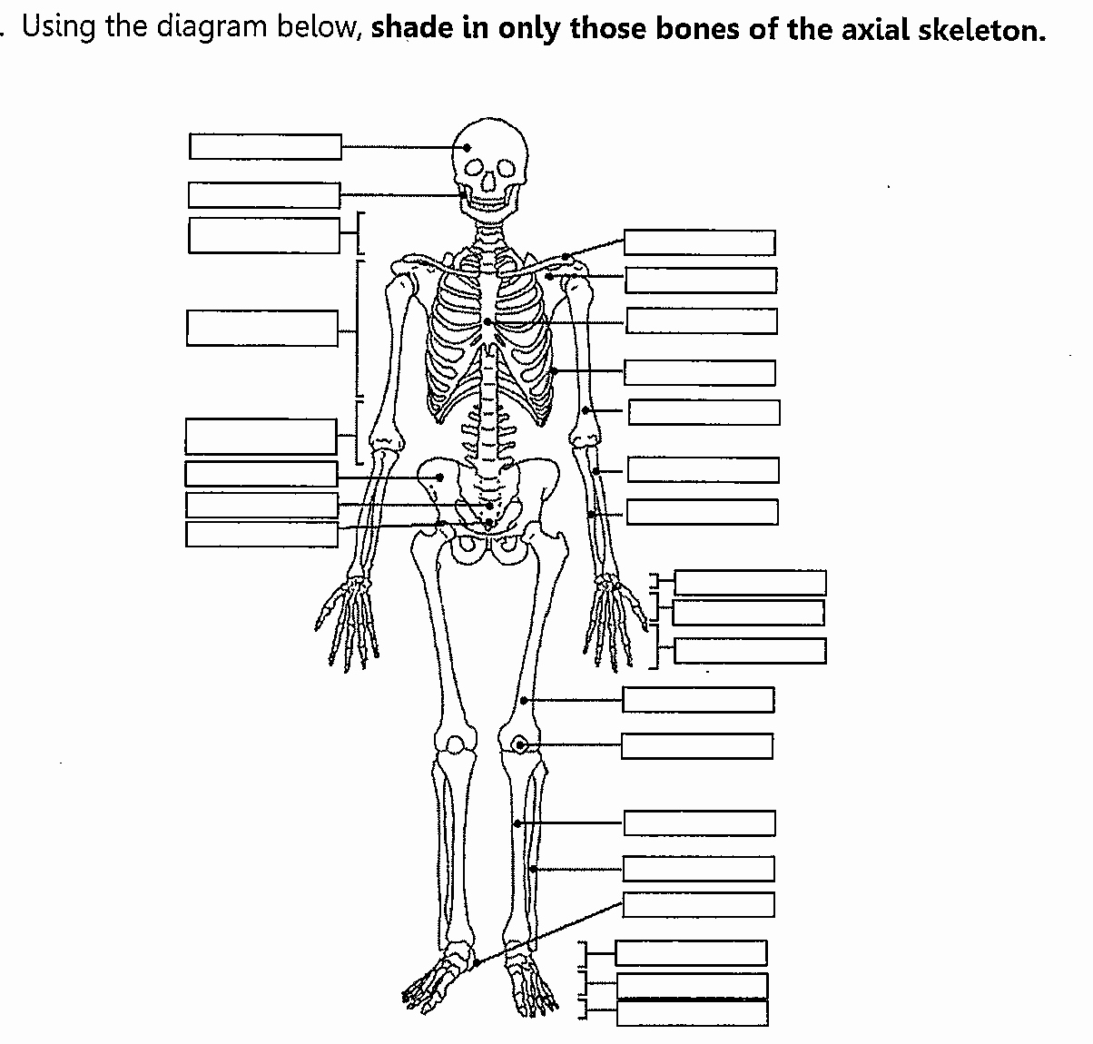 Appendicular Skeleton Worksheet Answers Elegant Worksheets Appendicular Skeleton Worksheet Waytoohuman