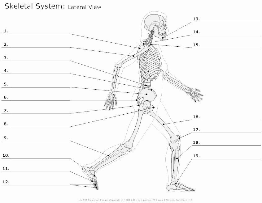 Appendicular Skeleton Worksheet Answers Fresh 11 Best Of Pe Activity Worksheets Ing Worksheets