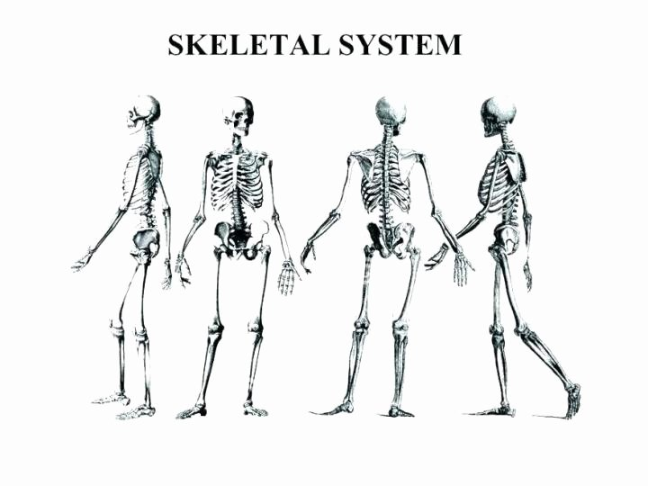 Appendicular Skeleton Worksheet Answers New Anatomy and Physiology Coloring Workbook Answers Chapter 5