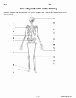 Appendicular Skeleton Worksheet Answers New Axial and Appendicular Skeleton Coloring Grade 10 Free