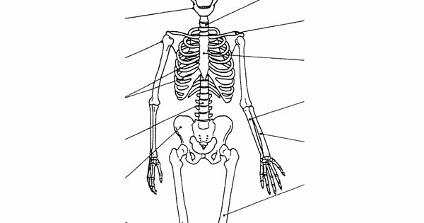 Appendicular Skeleton Worksheet Answers Unique Appendicular Skeleton Labeling Worksheet