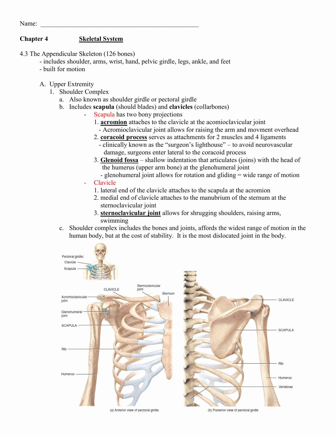 Appendicular Skeleton Worksheet Answers Unique Worksheet Appendicular Skeleton Worksheet Grass Fedjp