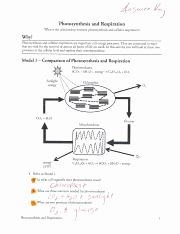 Atp Worksheet Answer Key Awesome Answer Key Synthesis and Respiration Pogil Pdf A