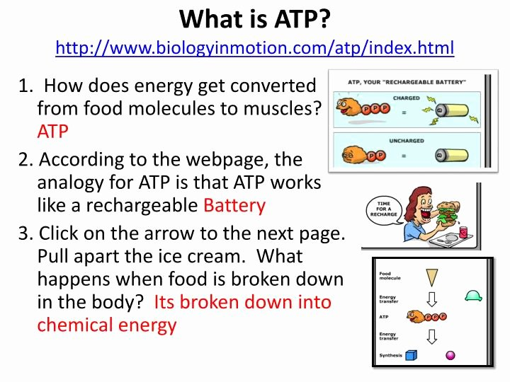 Atp Worksheet Answer Key Beautiful Printables atp Worksheet Messygracebook Thousands Of