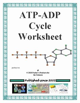 Atp Worksheet Answer Key Elegant atp Adp Cycle Worksheet by Parker S Products for the