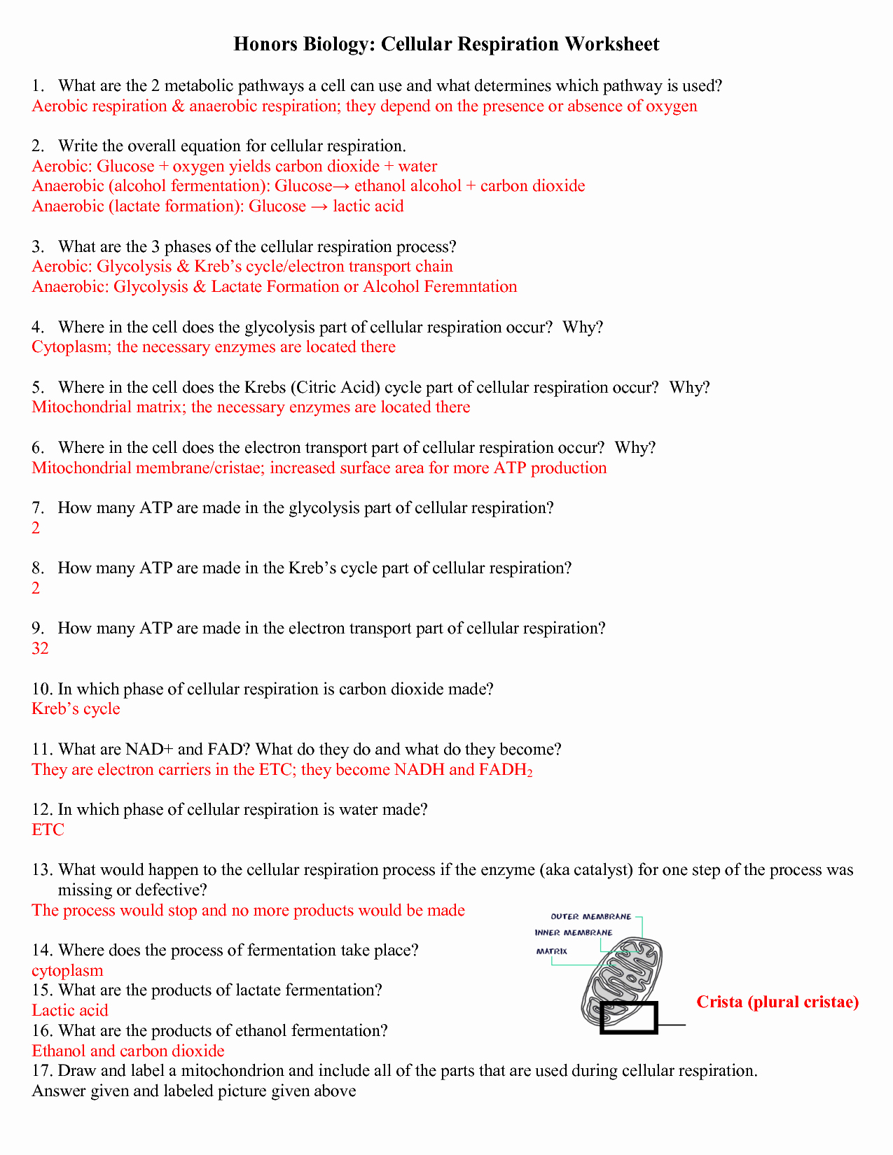 Atp Worksheet Answer Key Elegant Cellular Respiration Questions