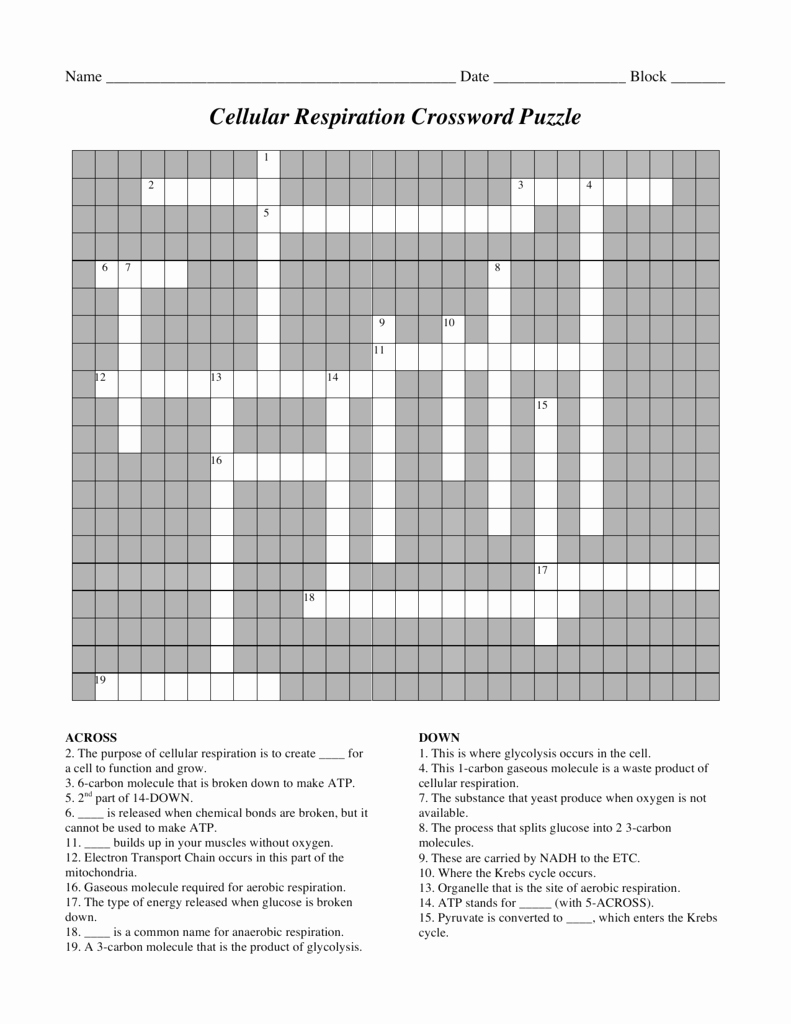 Atp Worksheet Answer Key Fresh Cellular Respiration Crossword Puzzle