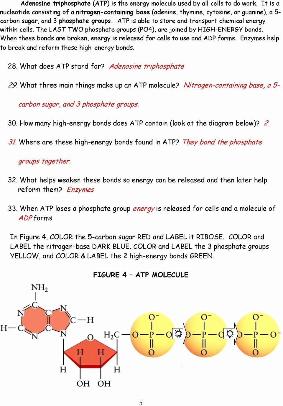 Atp Worksheet Answer Key Lovely Chloroplasts and Mitochondria Pdf