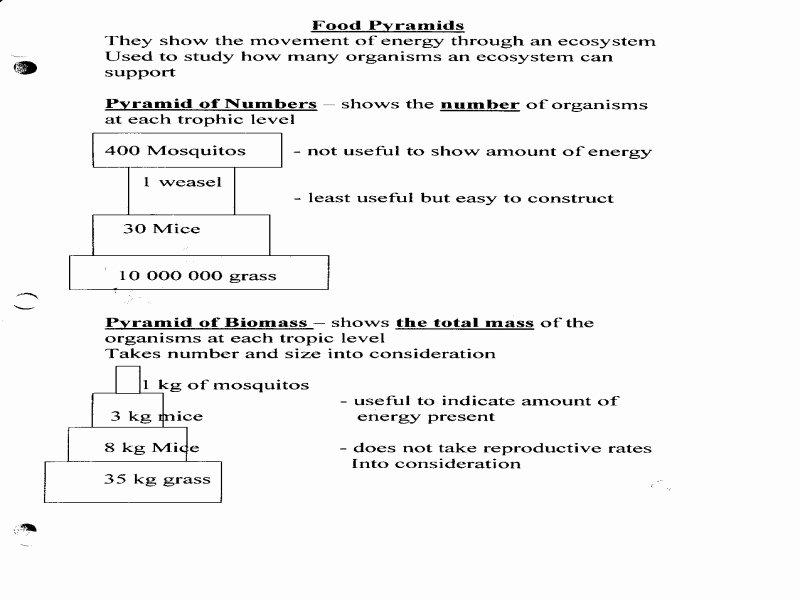 Bill Nye Erosion Worksheet Lovely Bill Nye Erosion Worksheet Free Printable Worksheets