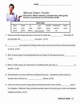 Bill Nye Food Web Worksheet Beautiful Bill Nye Video Questions Food Web W Timestamp Word Bank
