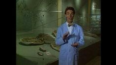 Bill Nye Fossils Worksheet Best Of Fossils Bill Nye Fossils