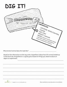 Bill Nye Fossils Worksheet Best Of How A Fossil forms