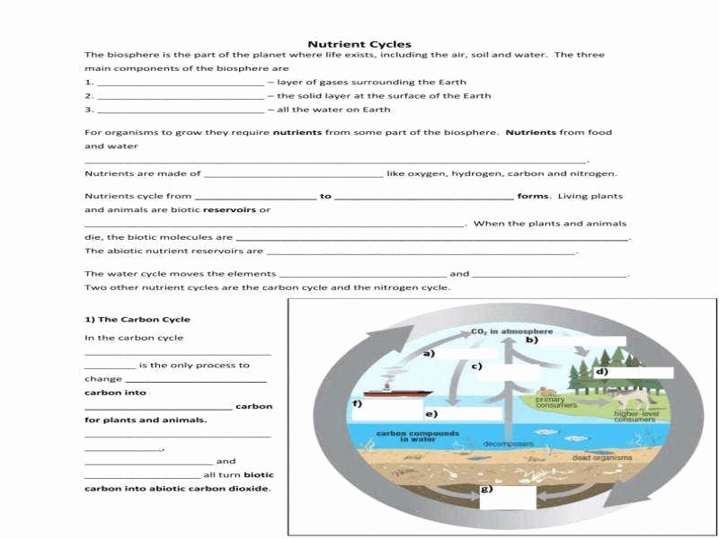 Biogeochemical Cycles Worksheet Answers New Biogeochemical Cycles Worksheet